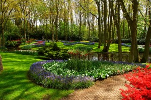 Beautiful flowers, Green Grass, Trees and pond